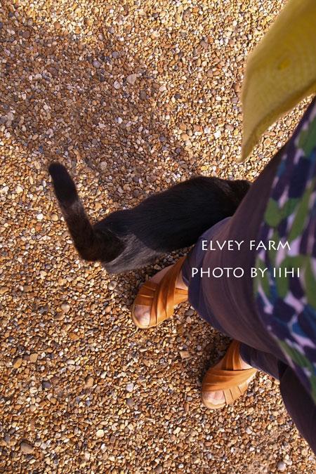 20140715elveyfarm35.jpg