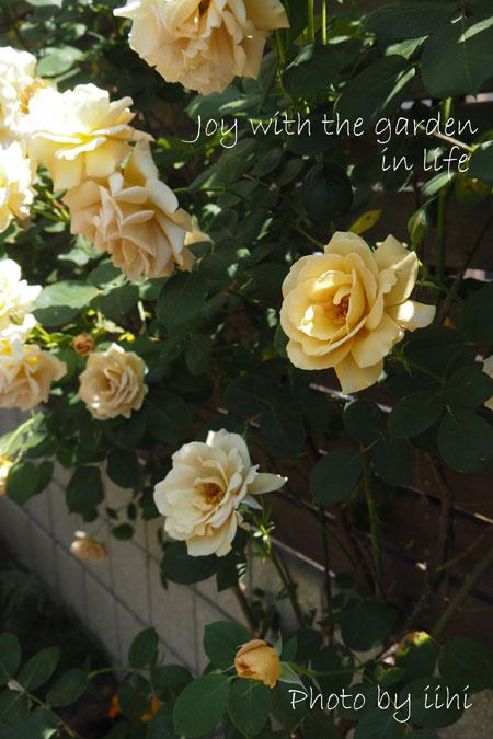 20150510-11joywithgarden.jpg