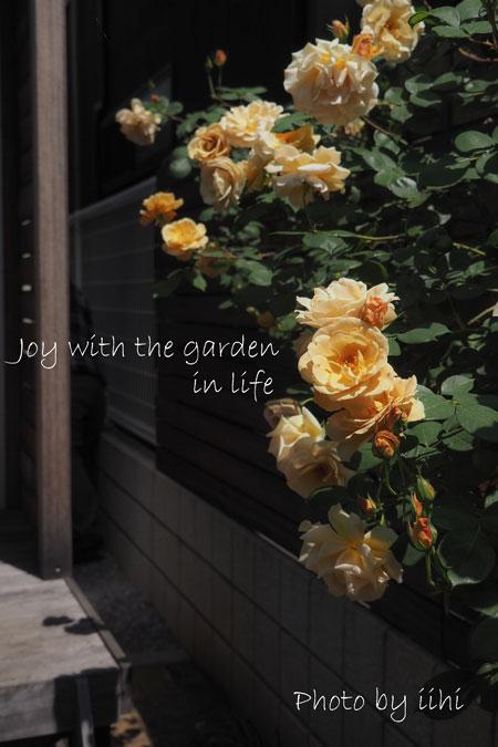 20150510-5joy-with-garden.jpg