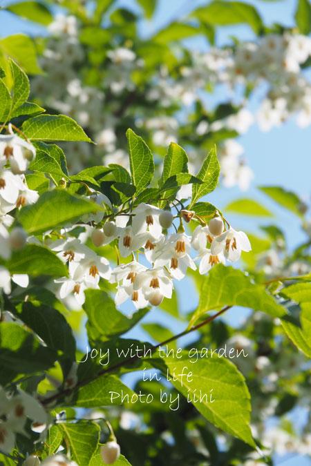 20150510-7joy-with-garden.jpg