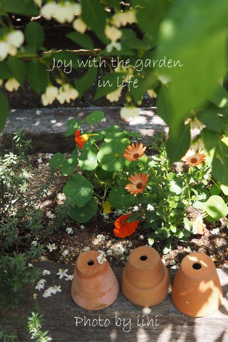 20150510-8joy-with-garden.jpg