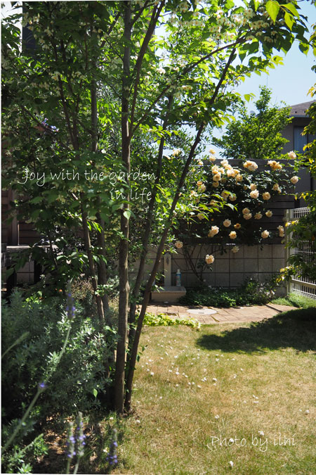 20150510-9joy-with-garden.jpg