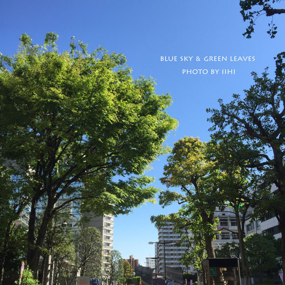 blueskygreenleaves.jpg
