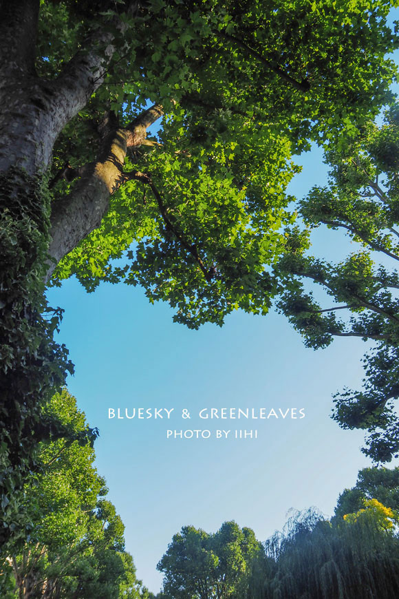 blueskygreenleaves2014london.jpg