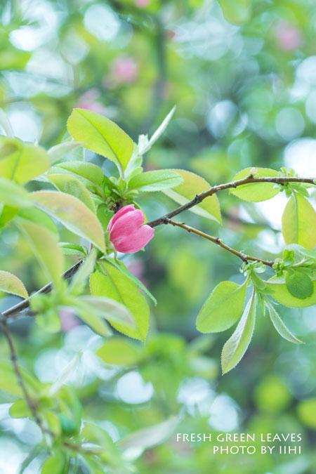 fresh-green-leaves20140411.jpg