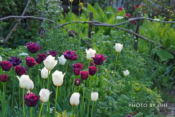 gardencafegsan2-2015apr.jpg