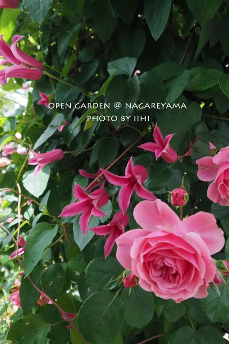 nagareyamaopengarden2015_12.jpg