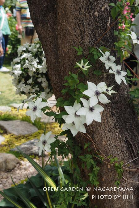 nagareyamaopengarden2015_13.jpg