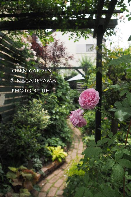 nagareyamaopengarden2015_26.jpg
