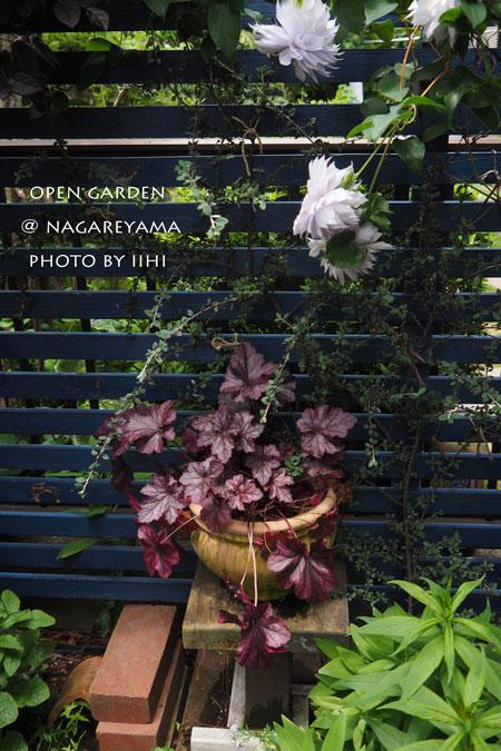 nagareyamaopengarden2015_33.jpg