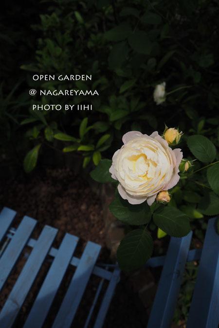 nagareyamaopengarden2015_41.jpg