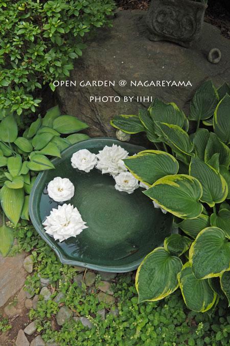 nagareyamaopengarden2015_46.jpg