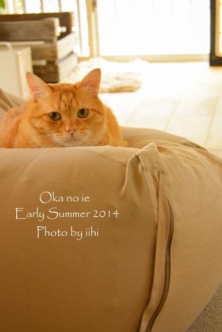 okanoieInterior2-2014e-summ.jpg