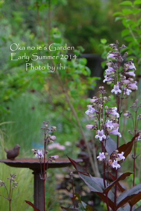 okanoiegarden29-2014e-summe.jpg
