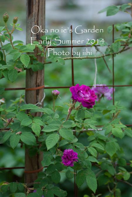 okanoiegarden312014e-summe.jpg