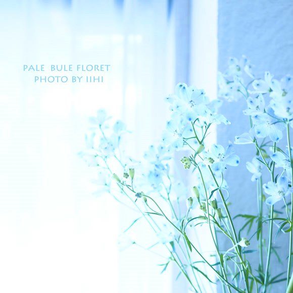 palebulefolpret2015.jpg