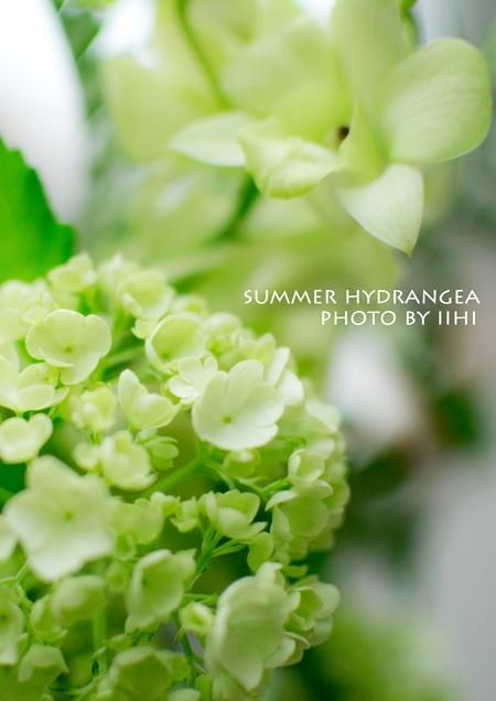 summerhydrangea2013_iihi.jpg
