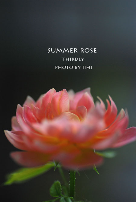 thirdlyrose2015summer.jpg