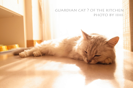 Guardiancat2.jpg