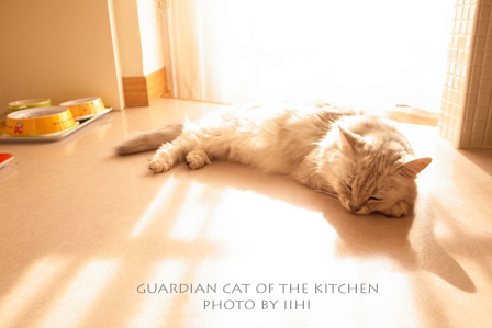 Guardiancat3.jpg