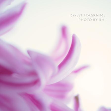 Sweet-fragrance.jpg