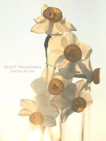 Sweet-fragrance2.jpg