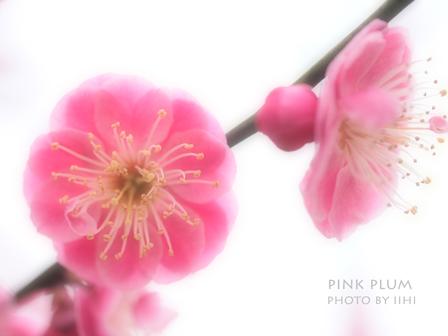 pink-plum.jpg