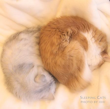 sleepingcatsblog_1.jpg