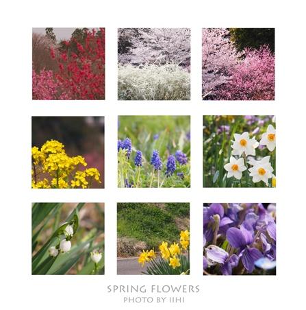 springflowers2012.jpg
