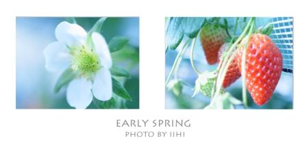 strawberry2011.jpg