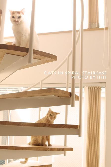 catsin-spiral-staircase2012.jpg