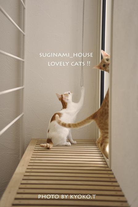 lovelycatssuginami2011_1.jpg