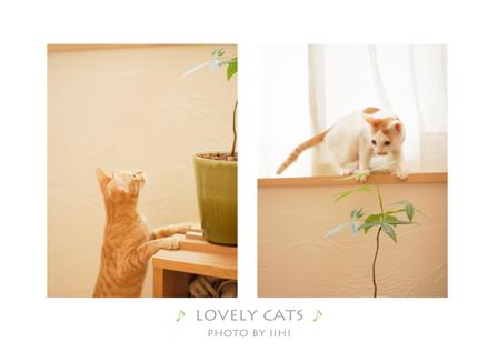 solovelycatssuginami2011.jpg