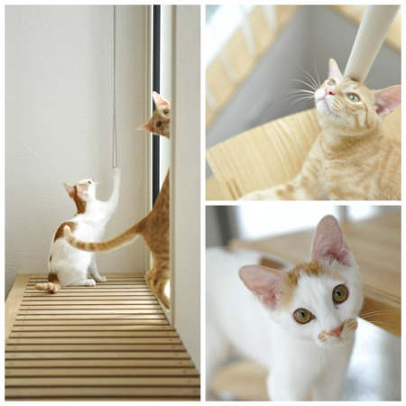 lovelycat-of-ks-home1.jpg